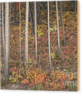 Majestic Autumn In The Grand Tetons Wood Print by Sandra Bronstein
