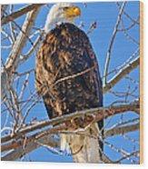 Majestic Bald Eagle Wood Print