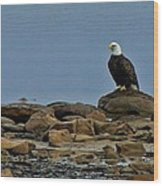 Majestic Bald Eagle Wood Print by Rhonda Humphreys