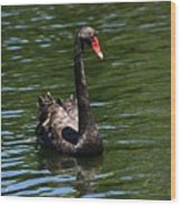 Majestic Black Swan Wood Print
