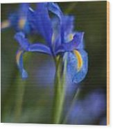 Majestic Blue Iris Wood Print