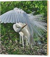 Majestic Egret Wood Print