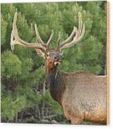 Majestic Elk Wood Print