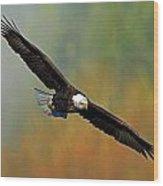 Majestic Flight Wood Print