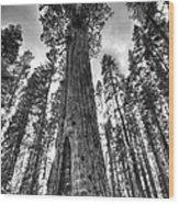 Majestic Giant Wood Print