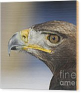 Majestic Golden Eagle Wood Print by Inspired Nature Photography Fine Art Photography