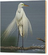 Majestic Great Egret Wood Print