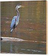 Majestic Heron Wood Print