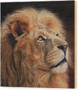 Majestic Lion Wood Print by David Stribbling