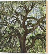 Majestic Oak 3 Wood Print
