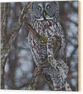 Majestic Owl Wood Print