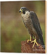 Majestic Peregrine Falcon In The Rain Wood Print by Inspired Nature Photography Fine Art Photography
