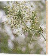 Majestic Queen -  Queen Anne's Lace Daucus Carota Wood Print