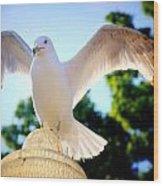 Majestic Seagull II Wood Print