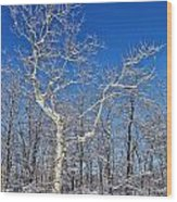 Majestic Sycamore In Winter Wood Print