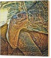 Majestic Tortoise Wood Print