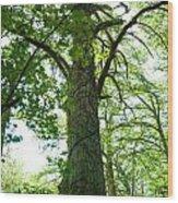 Majesty Wood Print by Barbara Shallue