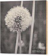 make a wish II Wood Print