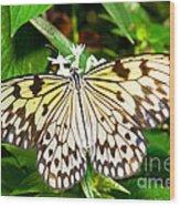 Malabar Tree Nymph Butterfly Wood Print