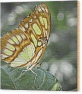 Malachite Butterfly Wood Print