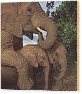 Malalka Mothering Orphans Tsavo Kenya Wood Print