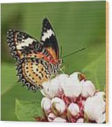 Malay Lacewing Wood Print