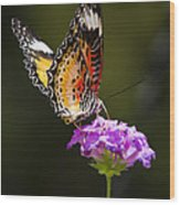Malay Lacewing On A Flower  Wood Print