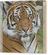 Malayan Tiger 1 Wood Print