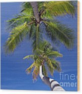 Maldivian 10 Wood Print by Giorgio Darrigo