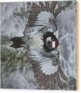 Male Acorn Woodpecker - Phone Case Design Wood Print by Gregory Scott