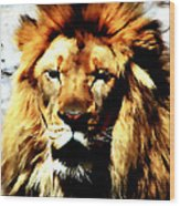 Male African Lion 2 Wood Print