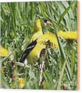 Male American Goldfinch Camouflage Wood Print