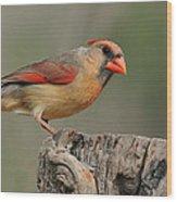 Male And Female Cardinal Wood Print