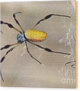 Male And Female Golden Silk Spiders Wood Print