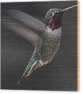 Male Anna Hummingbird In Flight Wood Print