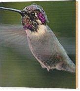 Male Anna's In Flight Wood Print