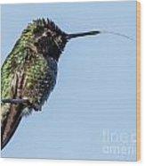Male Anna's Hummingbird Wood Print
