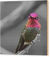 Male Anna's Hummingbird Wood Print