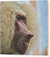 Male Baboon Wood Print