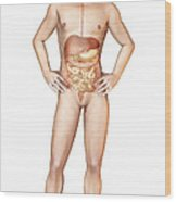 Male Body Standing, With Full Digestive Wood Print