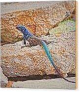 Male Bonaire Whiptail Lizard Wood Print