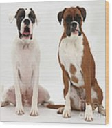 Male Boxer With Female Boxer Dog Wood Print
