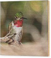 Male Broad-tailed Hummingbird Wood Print by Old Pueblo Photography