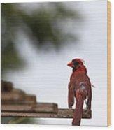 Male Cardinal Bird Closeup Wood Print