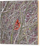 Male Cardinal Cold Day 2 Wood Print