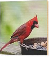 Male Cardinal Dinner Time Wood Print