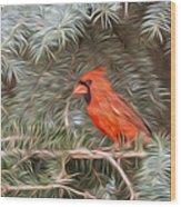 Male Cardinal In Spruce Tree Wood Print