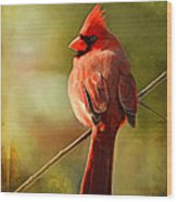 Male Cardinal In The Sun - Digital Paint Wood Print