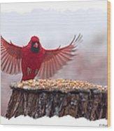 Male Cardinal Landing  Wood Print