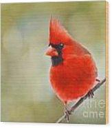 Male Cardinal On Angled Twig - Digital Paint Wood Print
